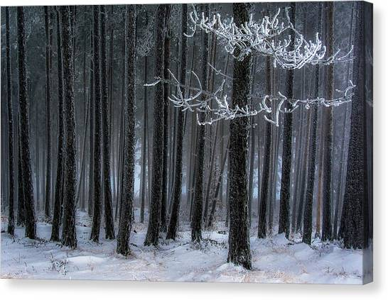Hoarfrost Canvas Print - The Trees Has Horns by Dragan Lapcevic