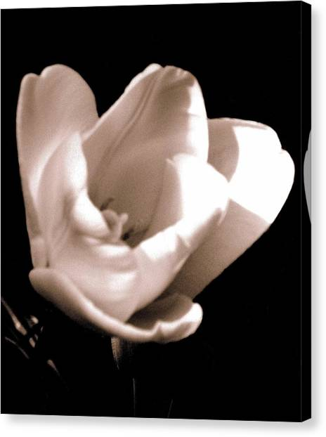 'the Tulip' Canvas Print