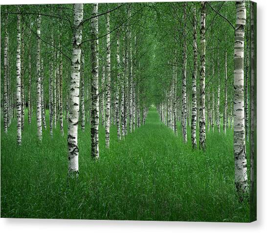 The Tunnel Canvas Print by Christian Lindsten