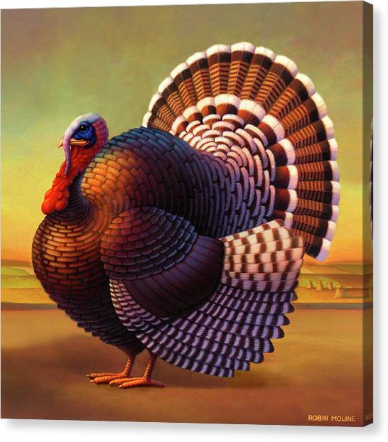 Turkeys Canvas Print - The Turkey by Robin Moline