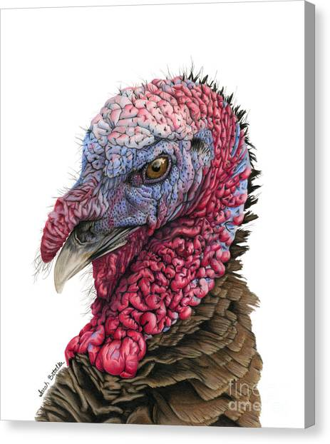 Large Birds Canvas Print - The Turkey by Sarah Batalka