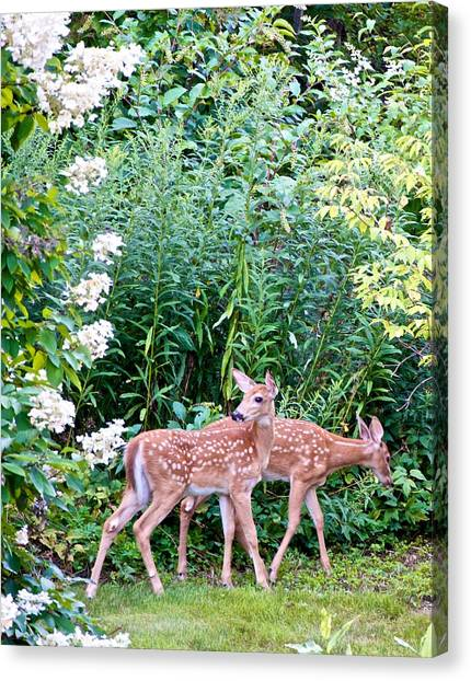 The Twins On The Move Canvas Print