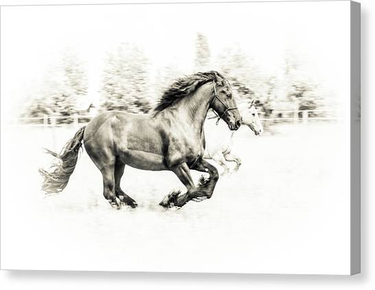 Horses Galloping Canvas Print - The Two Friends by Sebastian Graf
