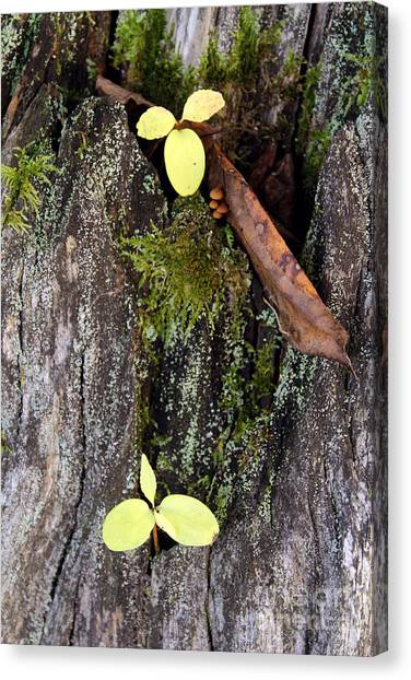 The Two In The Bark Canvas Print