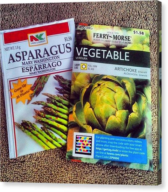 Artichoke Canvas Print - The Two One Champs : Asparagus Coming by Glen Campbell