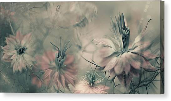 Close-up Canvas Print - The Virgins Ll by Heidi Westum