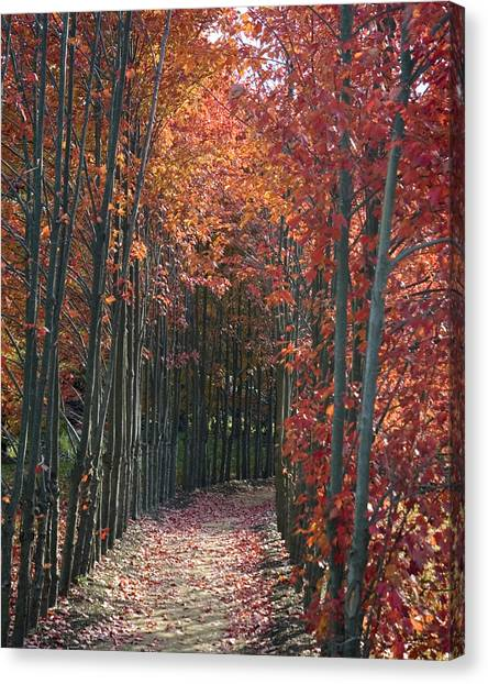 The Wall Of Trees Canvas Print
