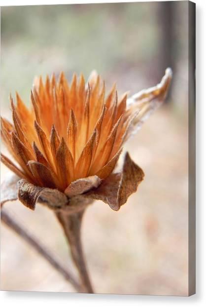 The Wandering Rustic Canvas Print