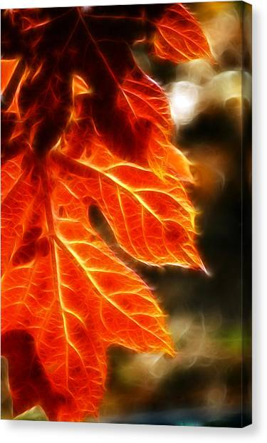The Warmth Of Fall Canvas Print