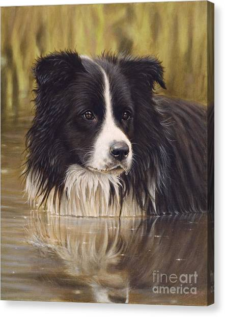Border Collies Canvas Print - The Water Baby by John Silver