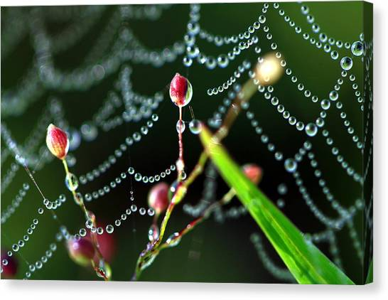 The Web And The Pods Canvas Print by Carolyn Fletcher