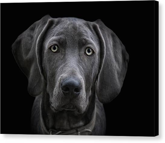 Weimaraners Canvas Print - The Weimaraner by Joachim G Pinkawa