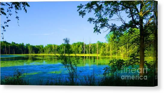 The Wetlands At Potato Creek Canvas Print