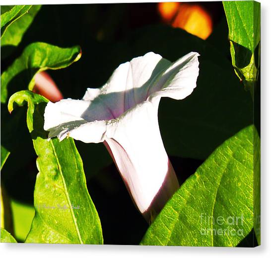 The White Trumpet Canvas Print