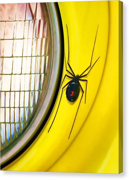 Black Widow Canvas Print - The Widow And The Light by Nikolyn McDonald