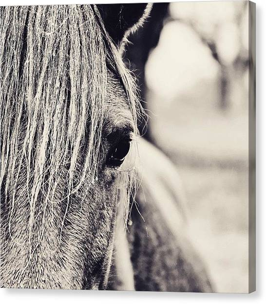 Rain Canvas Print - The Wild One #horse #rain #animal by Scott Pellegrin