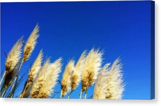 Seagrass Canvas Print - The Wind Gatherers - Sea Grass Art By Sharon Cummings by Sharon Cummings