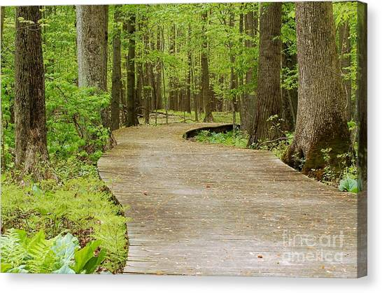 The Wooden Path Canvas Print