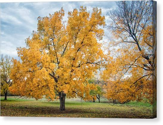 The Yellow Tree Canvas Print