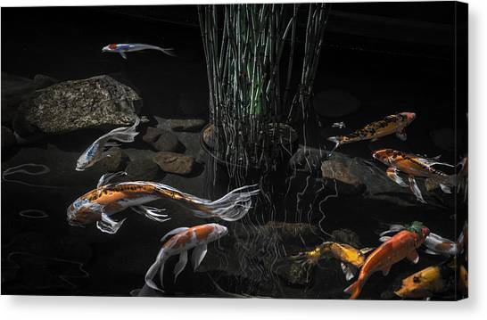 The Zen Of Koi Canvas Print
