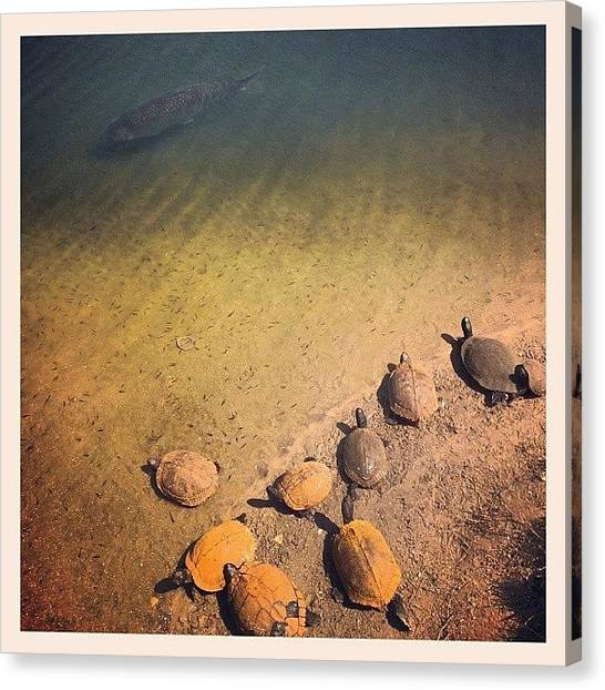 Jaws Canvas Print - Their Version Of #jews! #turtlesfordays by Joseph Vumbaco