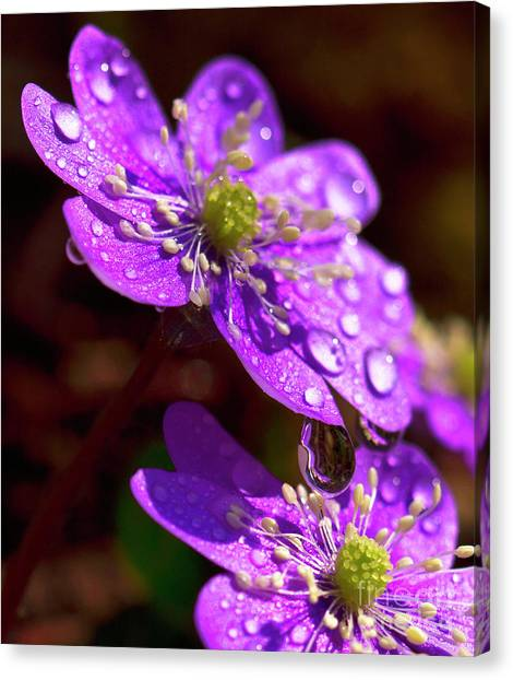 Then It Was Spring Canvas Print