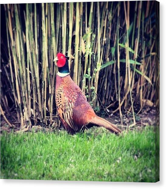 Bamboo Canvas Print - There Was A Pheasant Plucker.....  by Karie-ann Cooper