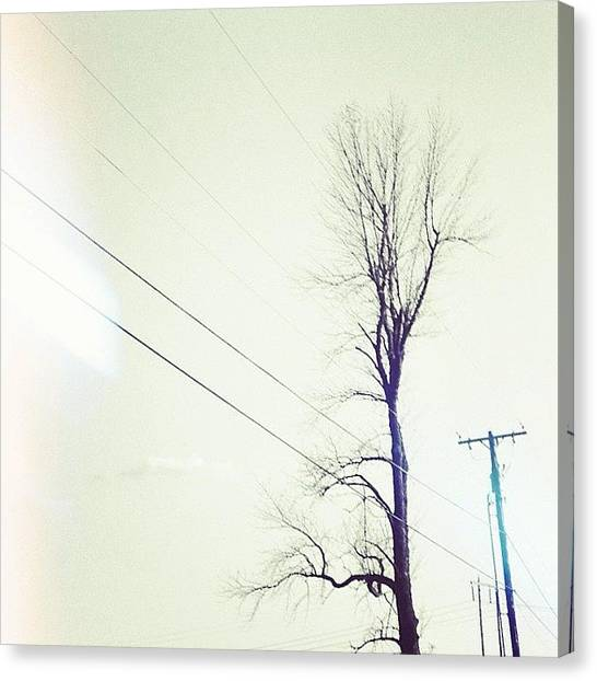 Jerseys Canvas Print - There's Nothing Left #powerlines #tree by Red Jersey