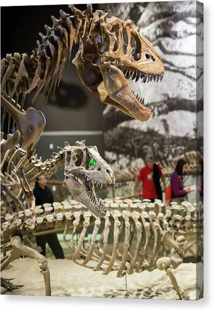 University Of Utah Canvas Print - Theropod Dinosaur Fossils Display by Jim West