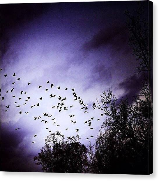 Starlings Canvas Print - They Are Flying South For The Winter by Mr Ciaramitaro