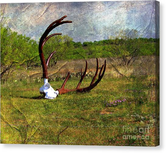 They Grow Them Big In Texas Canvas Print