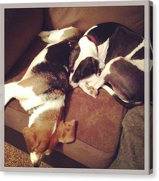 Beagles Canvas Print - They Irritate Eachother All Day, But by Rikki Goodwin
