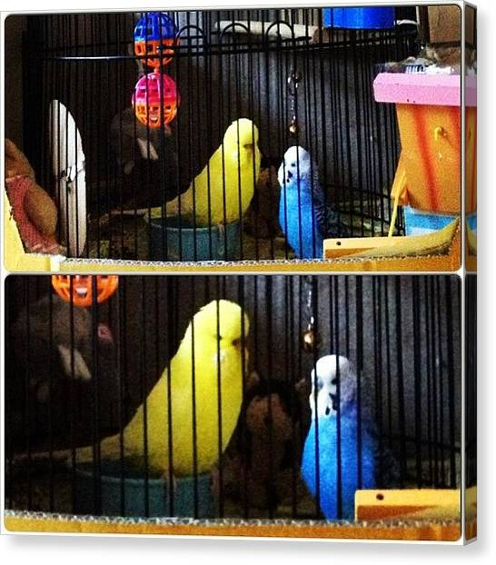 Parakeets Canvas Print - They Seemed To Be Discussing Some by Vincy S