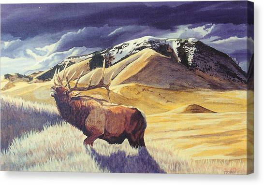 Theyre Bugling On West Butte Canvas Print
