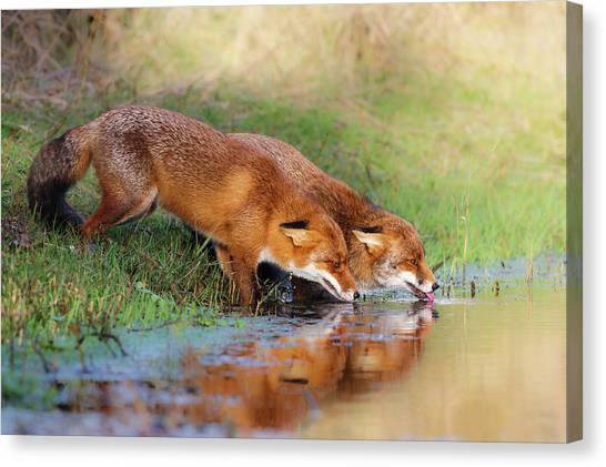 Couple Canvas Print - Thirsty by Pim Leijen