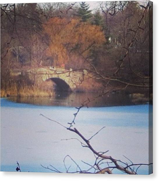 Dove Canvas Print - This Central Park Pond Is Well Known by Niki Loong
