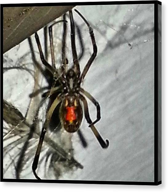 Spider Web Canvas Print - This Downtown Los Angels Resident by Kevin Previtali