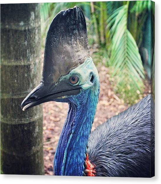 Dinosaurs Canvas Print - This Funky Lad Is A #southerncassowary by Brett Starr
