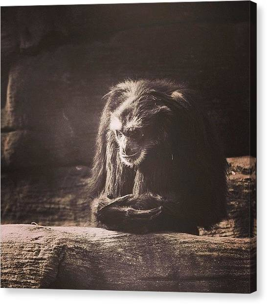 Apes Canvas Print - This Guy Looks Pissed! He Looks Like by Jesse Vargas
