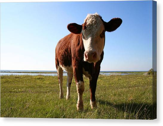 This Is My Grass Canvas Print