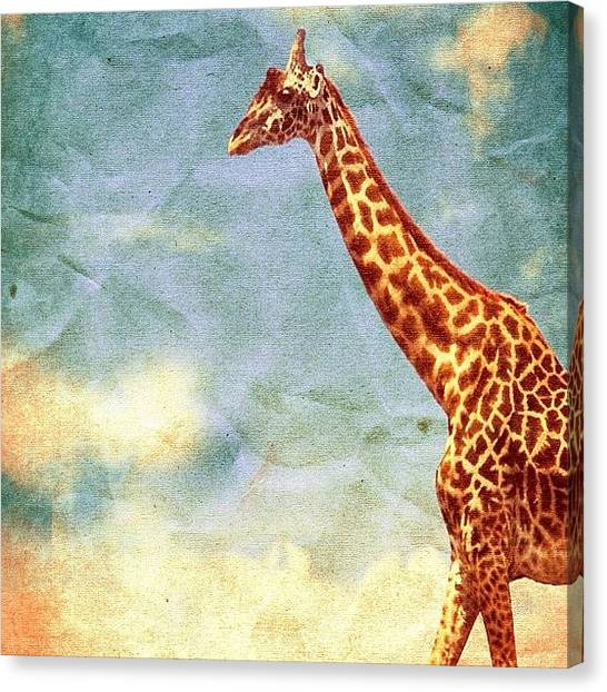 Giraffes Canvas Print - This Is The Full #color #version by Orlando Diaz