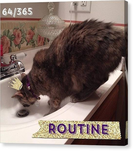 Kittens Canvas Print - This Is The Routine Of A #faucetdrinker by Teresa Mucha