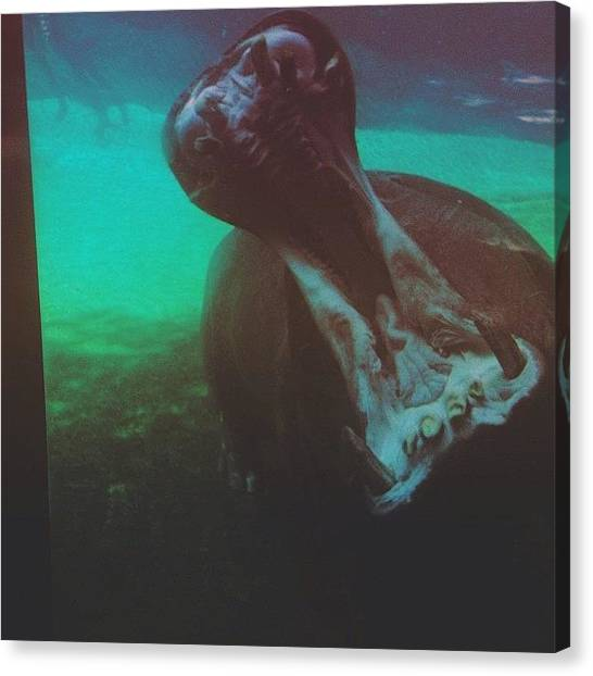 Hippos Canvas Print - This Just Happened.  by Guadalupe Serrano