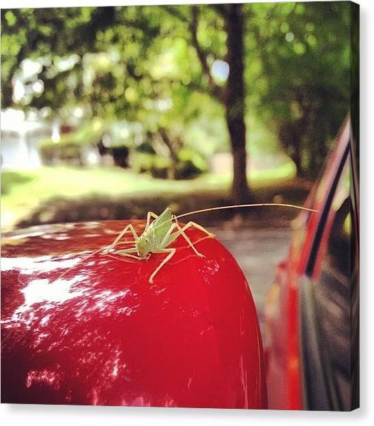 Grasshoppers Canvas Print - This Little #grasshopper Took A #ride by Leann Ridulfo