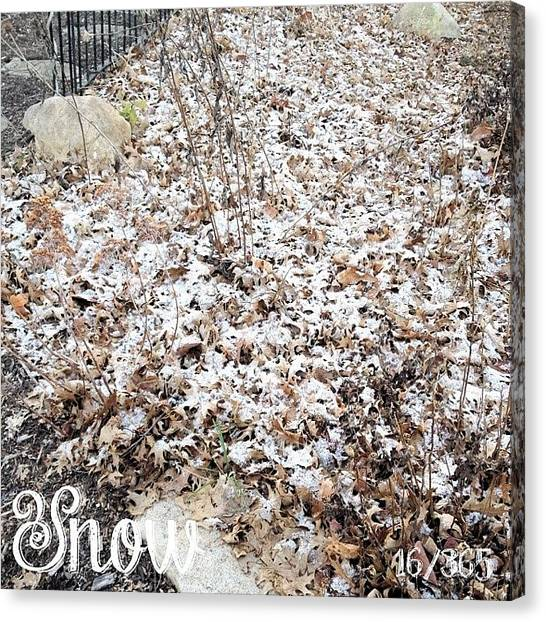 Snow Canvas Print - This May Be The Only #snow We Get This by Teresa Mucha