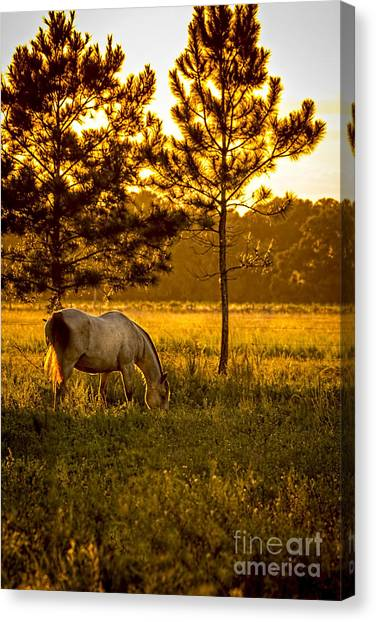 Horse Farms Canvas Print - This Old Friend by Marvin Spates