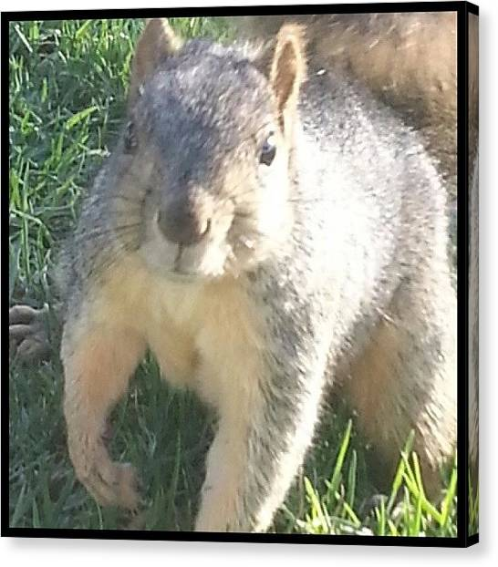 Squirrels Canvas Print - This One Does Not Want To Shake Hands by Kevin Previtali