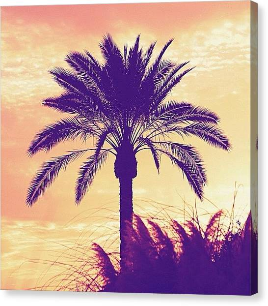 Palm Trees Sunsets Canvas Print - This One Is For The #ictrees Contest by Cristi Bastian