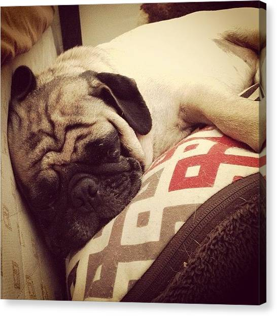 Pugs Canvas Print - This Pig Sleeps At Least 14 Hours A by Kaitlyn Geez