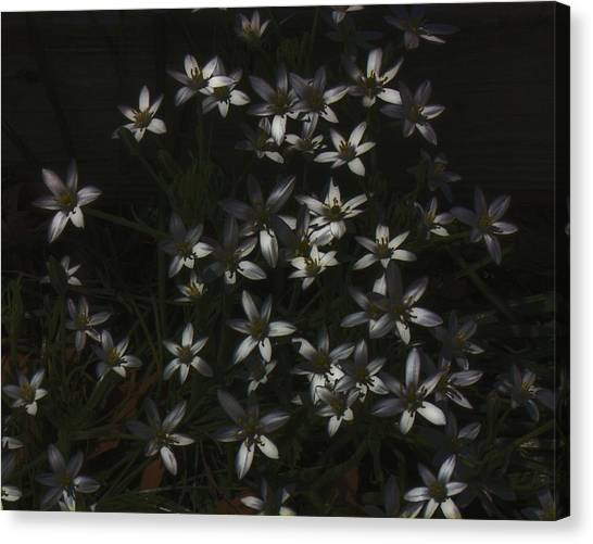 This Year's Bloom Canvas Print